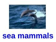 sea mammals  white whale  dolphin