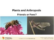Plants and Arthropods Friends or Foes? www. plantcell.