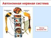 Презентация Автономная нервная система