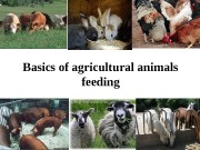 Basics of agricultural animals  feeding  VOCABULARY
