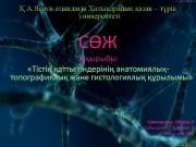 Презентация БДЕШ А СЖ ортопедия