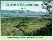 Среднее течение р. Колымы, Сеймчанская котловина. Хвойные бореальные