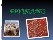 Введение  Бруцеллёз — зоонозное инфекционно-аллергическое заболевание,