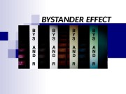BYSTANDER EFFECT   The bystander effect refers