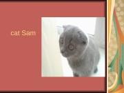Презентация cat Sam