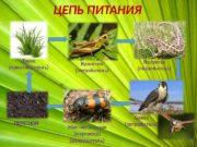 ЦЕПЬ ПИТАНИЯ Трава (производитель) Кузнечик (потребитель) Ящерица (потребитель)