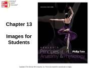 Презентация ch13 student image