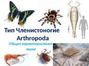 Общая характеристика  типа. Тип Членистоногие Arthropoda