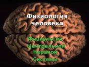 Физиология человека Физиология Центральной   Нервной Системы