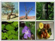 Корень Стебель Ствол Лист Цветок Плоды и семена