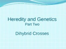 dihybrid-cross_ghanar_digibrid_slayd_0.jpg