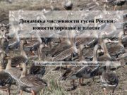 Динамика численности гусей России:  новости хорошие и