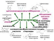 Фитогормоныцитокинины этилен ауксины гиббереллины абсцизовая кислота (АБК) жасмонаты