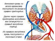 Венозная кровь со всего организма поступает по венам