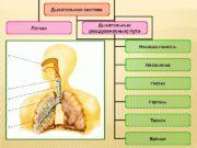 Дыхательная система Легкие Дыхательные (воздухоносные) пути Носовая полость