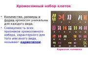 Хромосомный набор клеток  Количество, размеры и форма