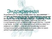 Эндокринная система человека. Эндокринную систему составляют так называемые