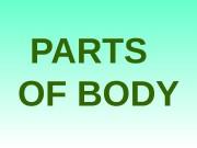 PARTS OF  BODY  body head