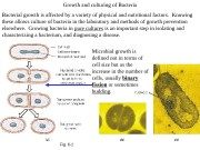 Fig. 6 -1 Growth and culturing of Bacteria