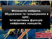 Фізіологія нейрона.  Збудження та гальмування в ЦНС.