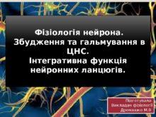 fіzіologіya_neyrona_0.jpg