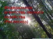 Презентация Federalnoe_agentstvo_lesnogo_khozyaystva