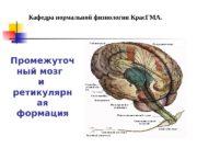 Промежуточ ный мозг  и ретикулярн ая формация