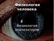 Физиология человека   Физиология анализаторов  Классификация