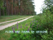 Flora Ukraine  The territory of Ukraine is
