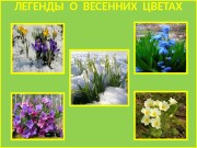 Презентация flower legend
