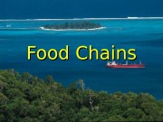 Презентация food chains