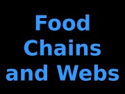 Food Chains and Webs  Producers Primary Consumers