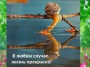 В любом случае,  жизнь прекрасна!  Подумайте!?