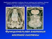 Презентация Гайворонский Лекция 3 Костная система
