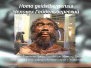 Homo geidelbergen s i s Человек Ге й