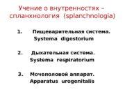 Учение о внутренностях – спланхнология ( splanchnologia)