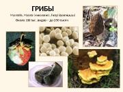 ГРИБЫ — Mycetalia, Mycota
