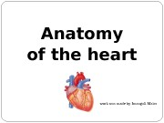 Презентация heart anatomy 1 Imangali