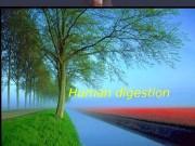 Презентация human-digestion