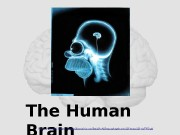 The Human Brain  MasterWatermarkImage:  http: //williamcalvin.