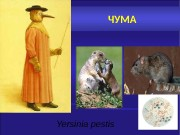 Презентация Инфекции — Чума Половинкина Н.А.
