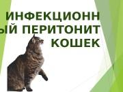 Презентация Инфекционный перитонит кошек Апестин А.С.