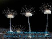 «Мир грибов нескончаемо велик» Стефан Каста ,