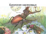 Биология насекомых  В течение своего индивидуального