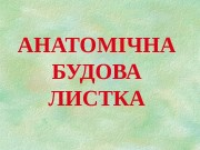 АНАТОМІЧНА БУДОВА ЛИСТКА  ФУНКЦІЇ ЛИСТКА Фотосинтез і