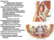В. В. Алипов Топографическая анатомия и оперативная хирургия
