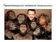 Происхождение человека (Антропогенез)  Предполагают,  что ближайшим