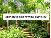 Экологические группы растений  Экологические группы растений –