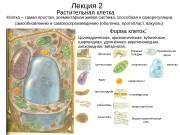 Лекция 2 Растительная клетка Клетка – самая простая,