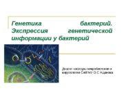 Генетика бактерий.  Экспрессия генетической информации у бактерий